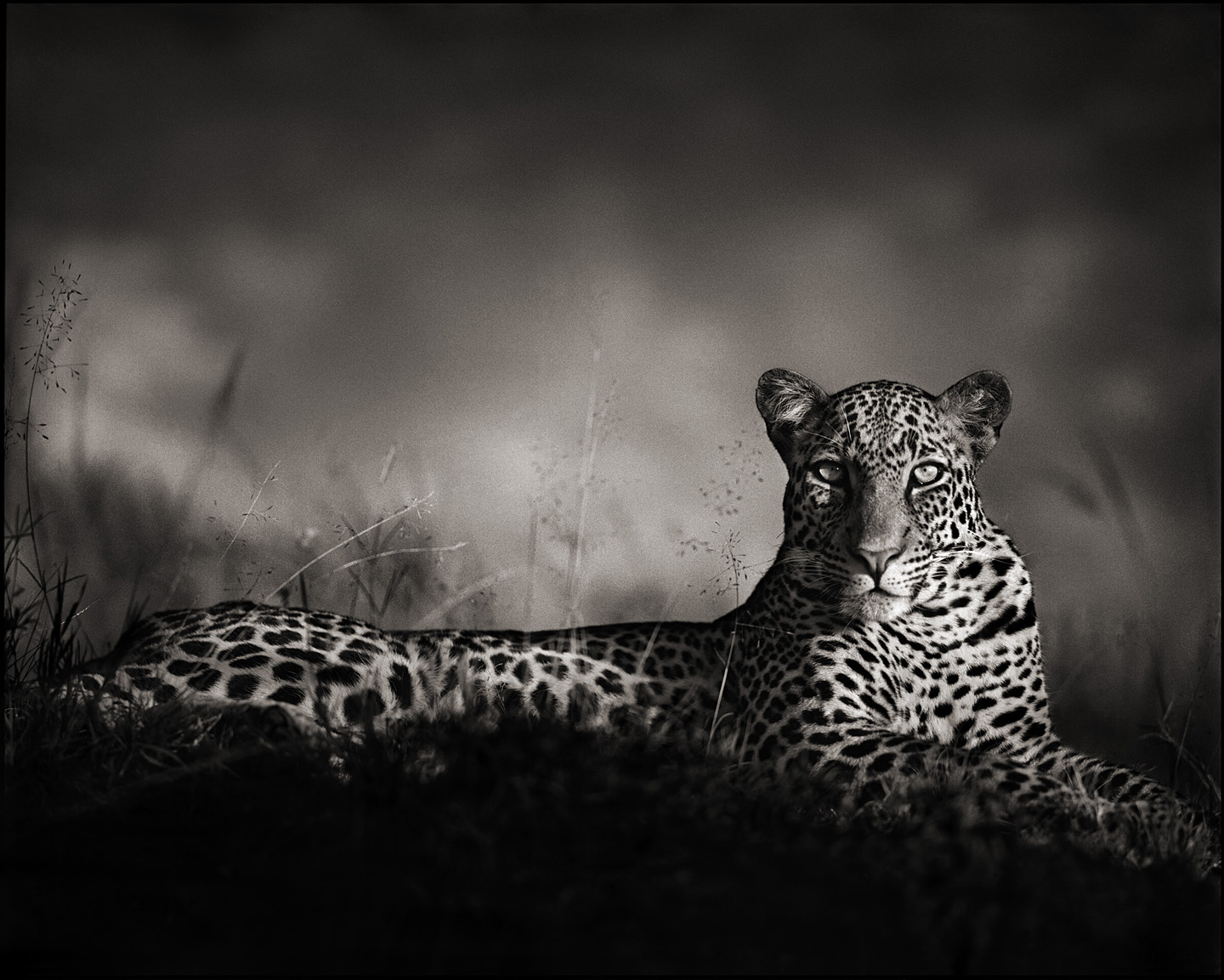 Animals Black And White Elephants 10000 Lions Big Cats: Fine Art PhotographyNick Brandt - Atlas