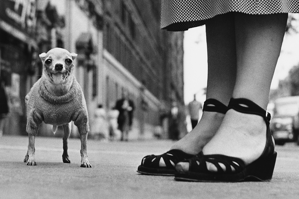 Elliott Erwitt - New York City