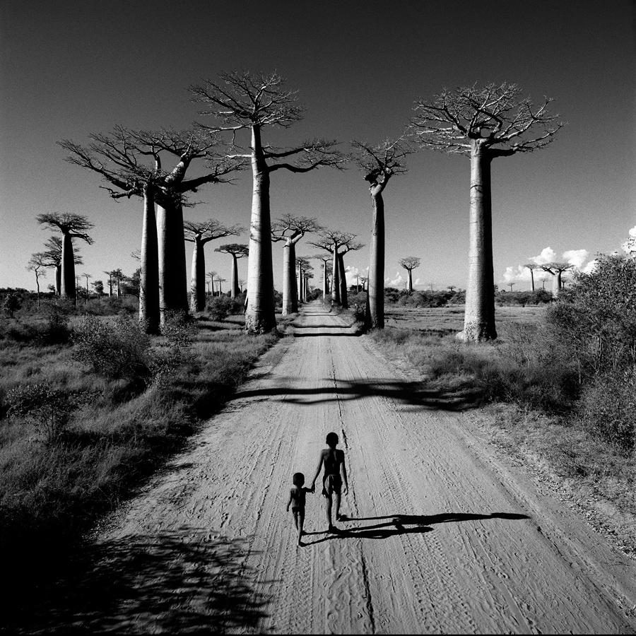 allee-des-baobabs-web
