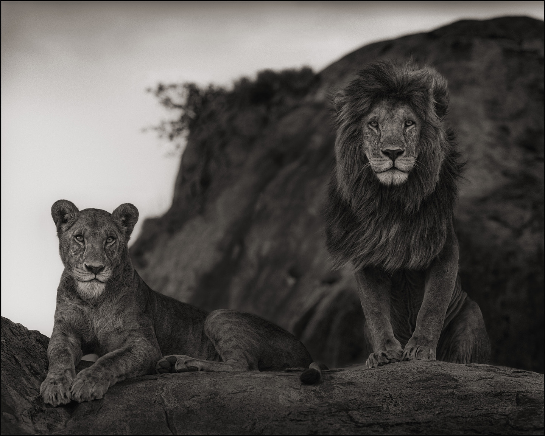 Nick_Brandt_LionCouple