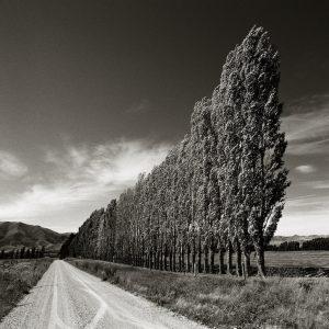 Chris Simpson Poplars