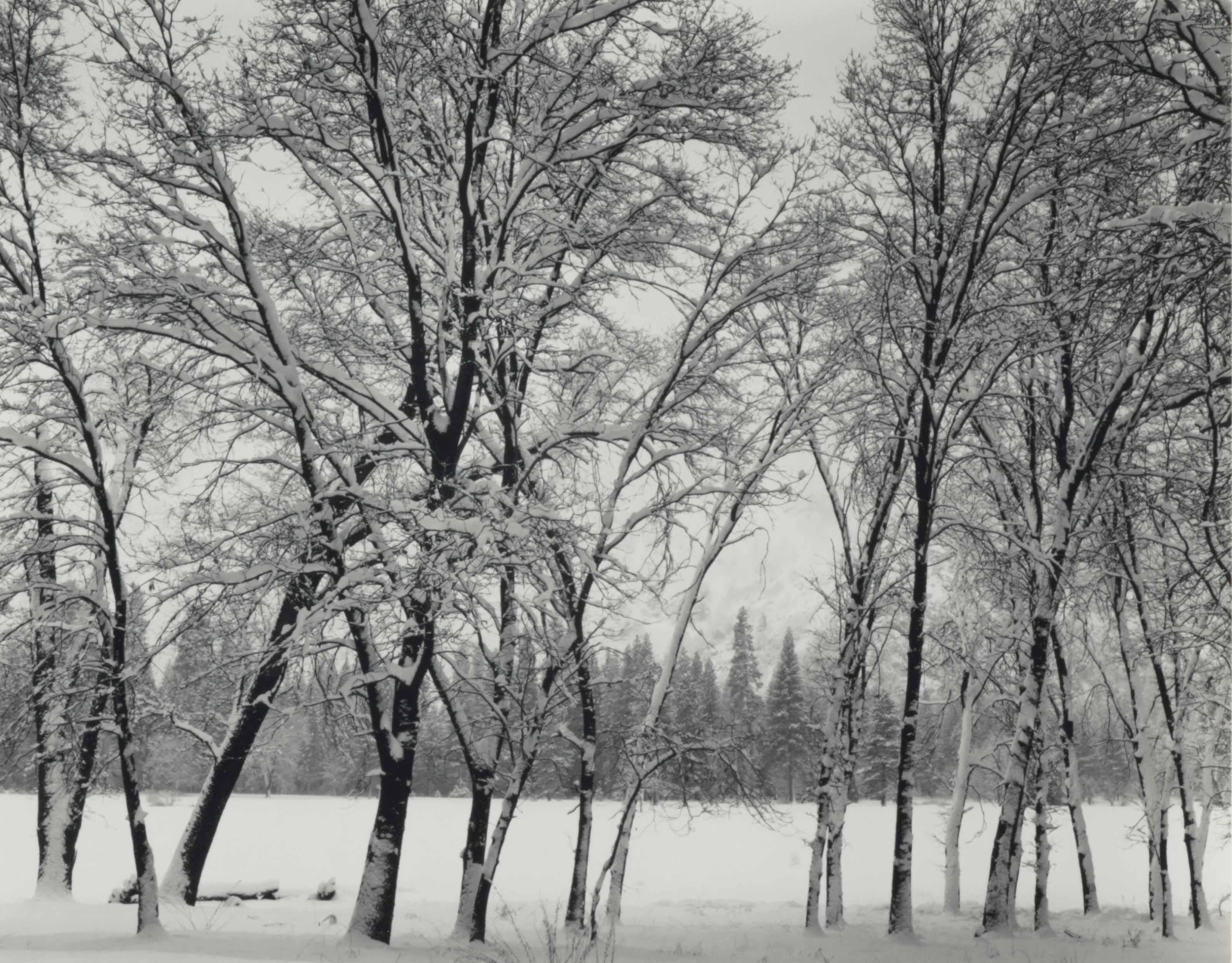 2017_NYR_14357_0238_000(ansel_adams_young_oaks_winter_yosemite_national_park_california_c_1938)