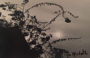 Tina Modotti Flowers
