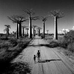Allee des Baobabs - Madagascar