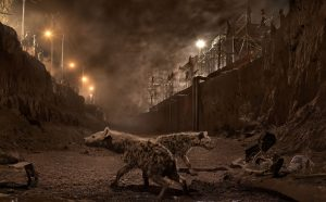 Nick Brandt, RIVER-BED-WITH-HYENAS-Atlas Gallery