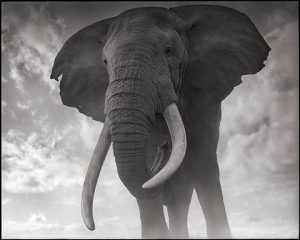 nick-brandt-elephant-against-sky,-amboseli