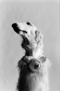 Elliott Erwitt, Dog New York