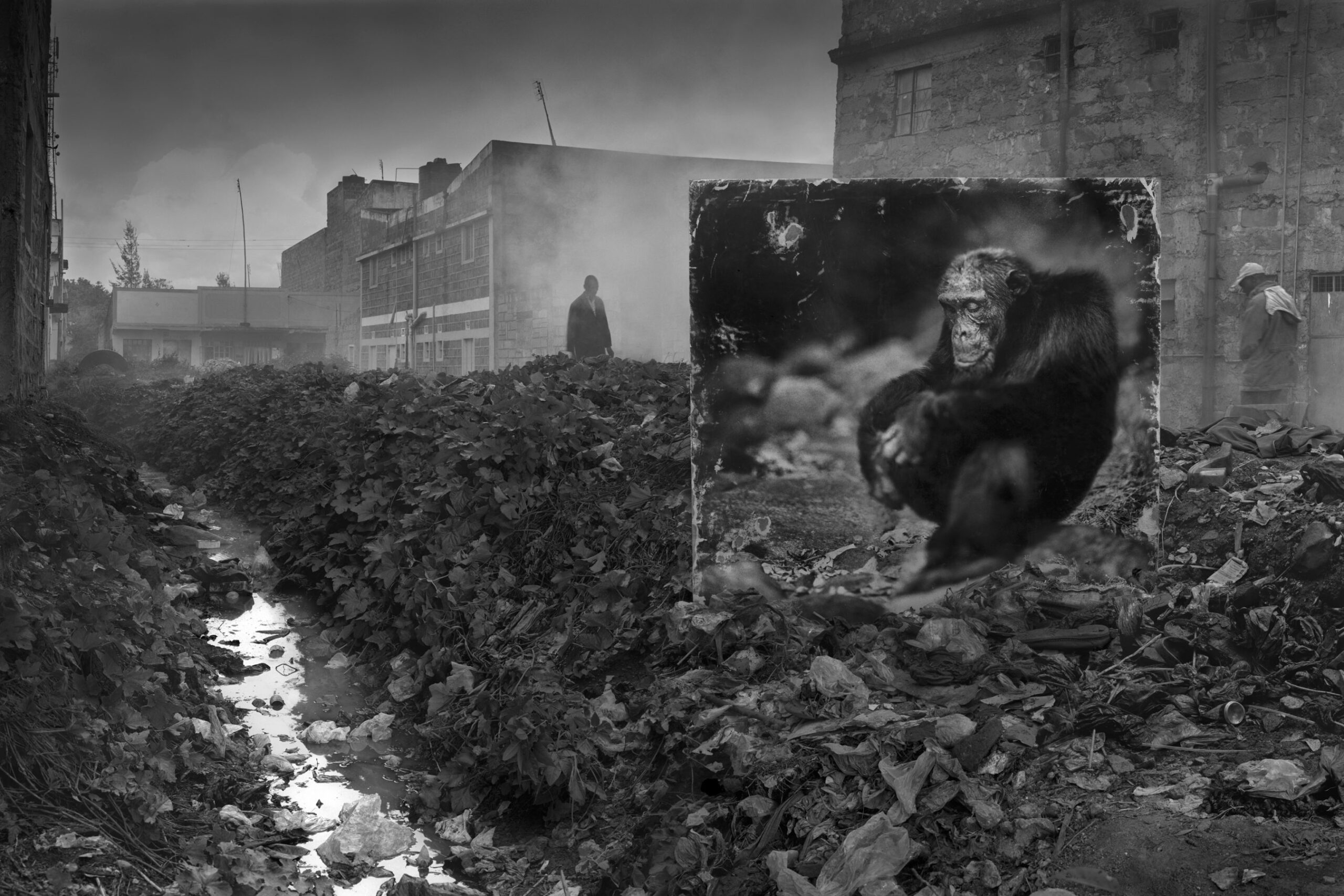 Nick Brandt ALLEYWAY-WITH-CHIMPANZEE-3200px
